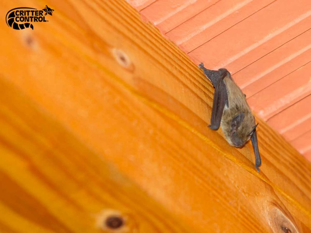 5 Bat Facts Every Lake County Homeowner Should Know