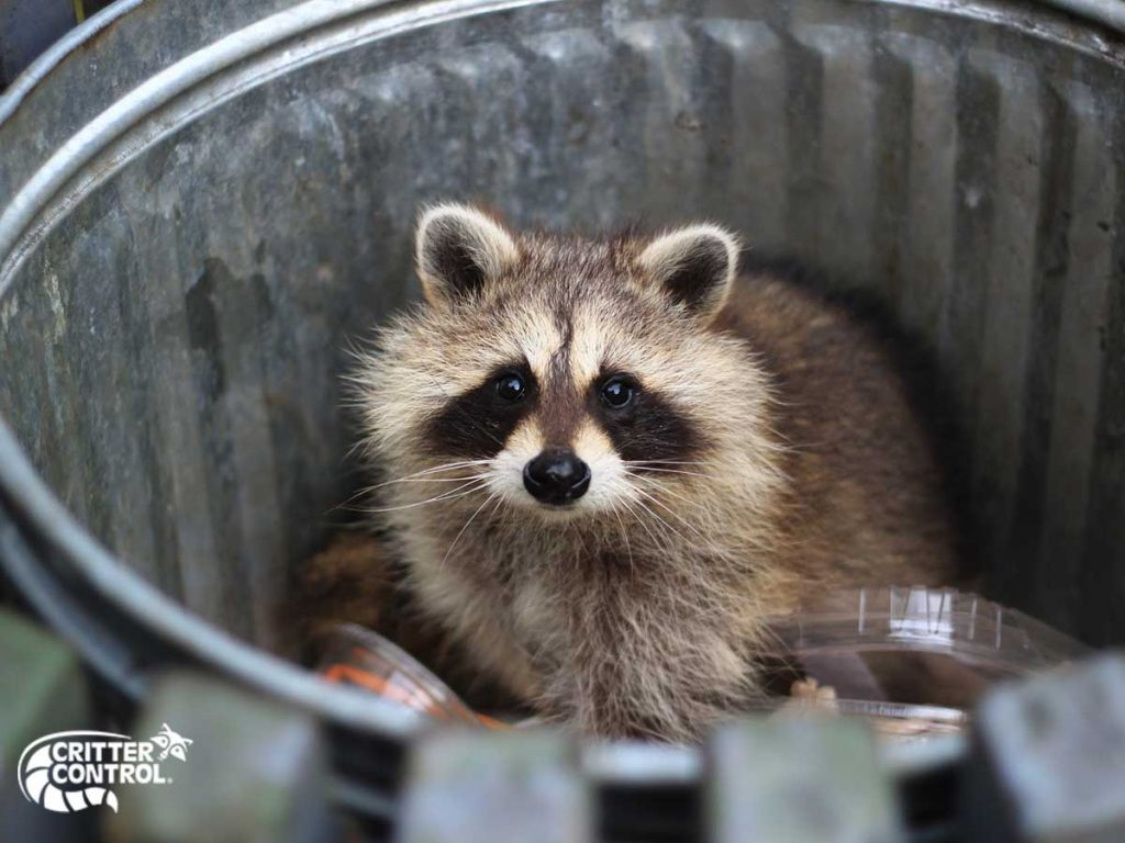 5 Common Types of Local Wildlife Found in Lake County