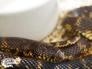 Eustis Snake Removal