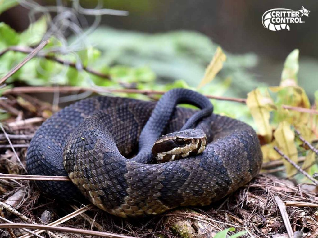 What Should I Do If I Find a Snake on My Lake County Property?